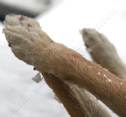 Горожанин сообщил о гибели своей собаки от неизвестного яда