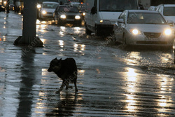 В городе - дождливый день
