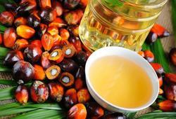 Володин: Госдума изучит причины роста импорта пальмового масла