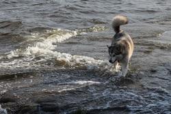 Времена. В РФ - акции протеста в защиту 31-й статьи Конституции, в Саратове запретили убивать собак