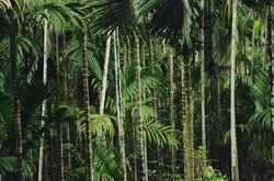 Область осталась в лидерах по импорту пальмового масла