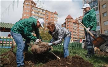 Волонтеры «Зеленой волны» высадили более 1300 саженцев в Красноярском крае