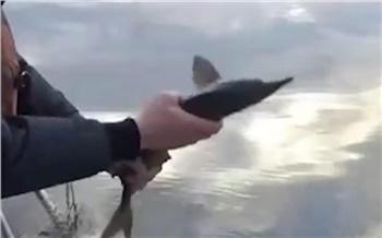 На севере Красноярского края полицейские отобрали у браконьеров рыбу и выпустили ее на волю