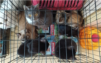 Красноярка держит в городской квартире 120 кошек, а на улице поселила еще 66 собак