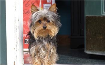 «Поставила собаку выше отношений»: житель Красноярского края на глазах у сожительницы убил ее терьера