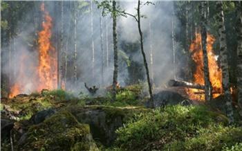 В Красноярском крае в два раза снизилось количество лесных пожаров