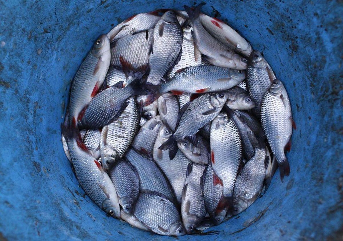 В Украине запретили нерестовый лов рыбы с 1 апреля