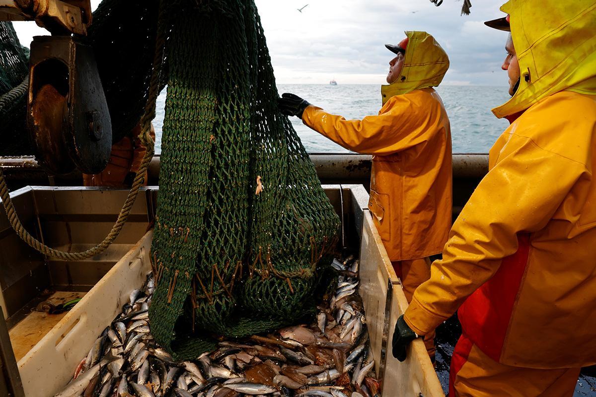 С начала года Украина увеличила вылов рыбы в Черном и Азовском морях в 1,5 раза