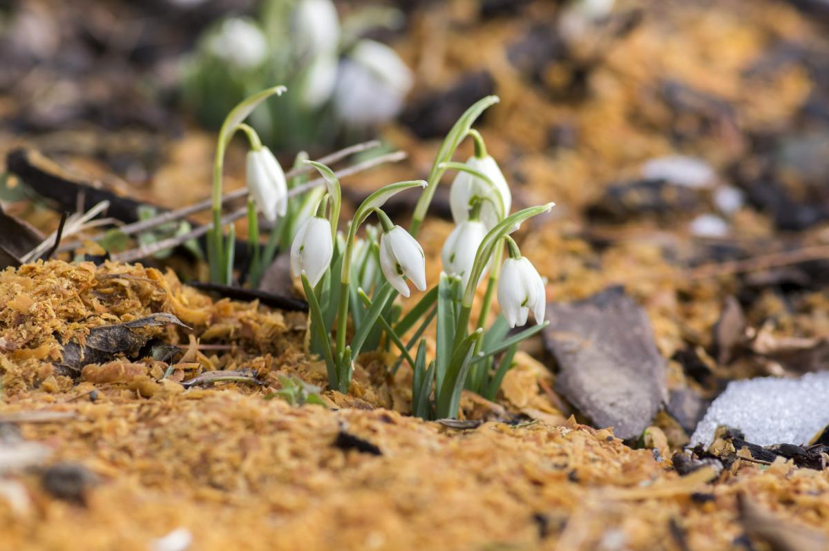 Народные обряды и обычаи 30 марта: какие есть запреты дня и приметы погоды