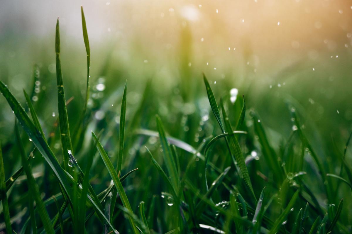 Дожди ослабнут и потеплеет: прогноз погоды в Украине на неделю