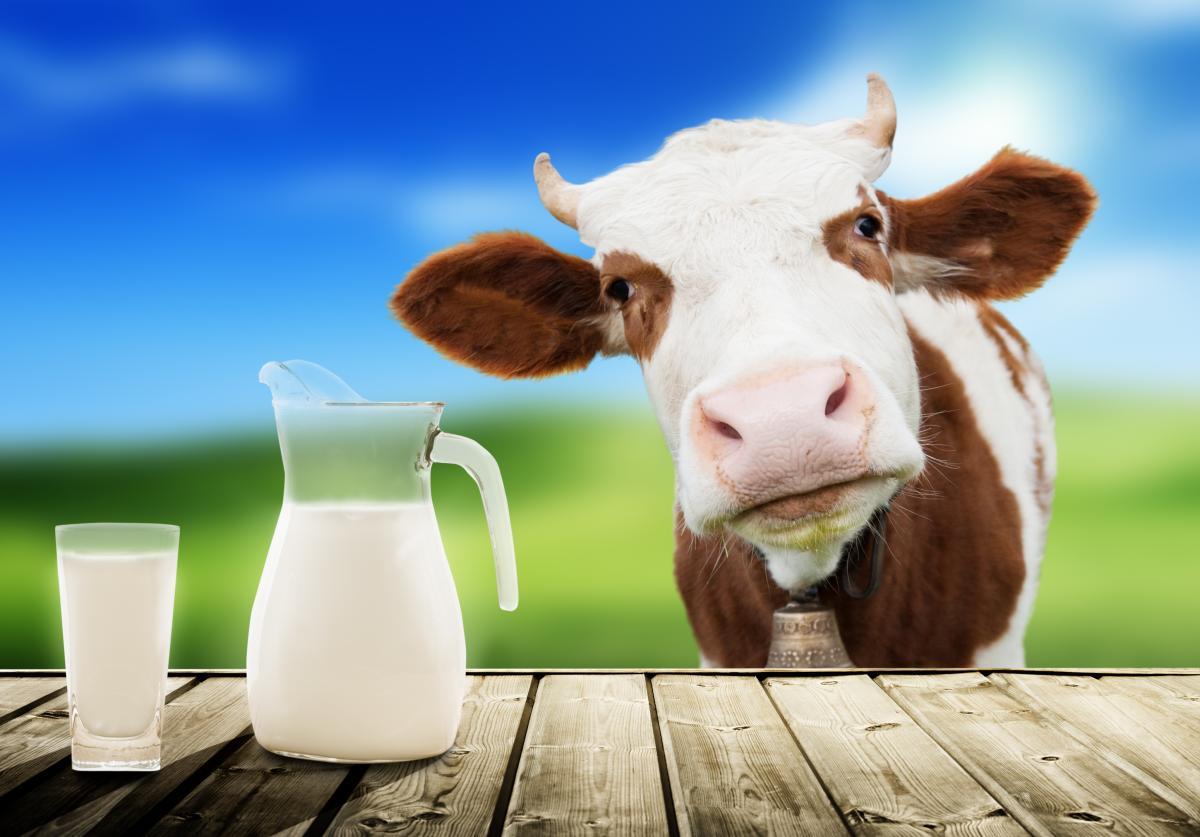 Молоко - мутант. Как и где найти ласковое, а не агрессивное
