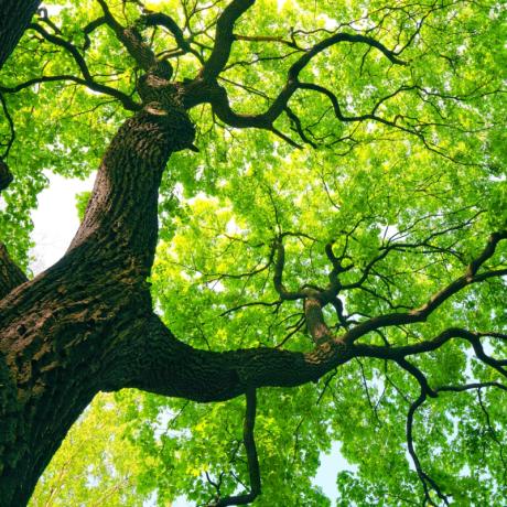 Учет дикорастущих деревьев и кустарников: позиция Минфина России изменилась