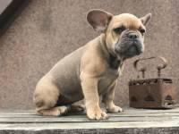 СМИ: неизвестный похитил собак Леди Гаги
