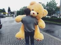 В Ижевске пойман серийный похититель плюшевых медведей