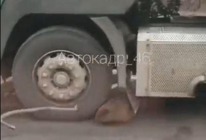 В Курской области бобр остановил движение на трассе М-2 'Крым'