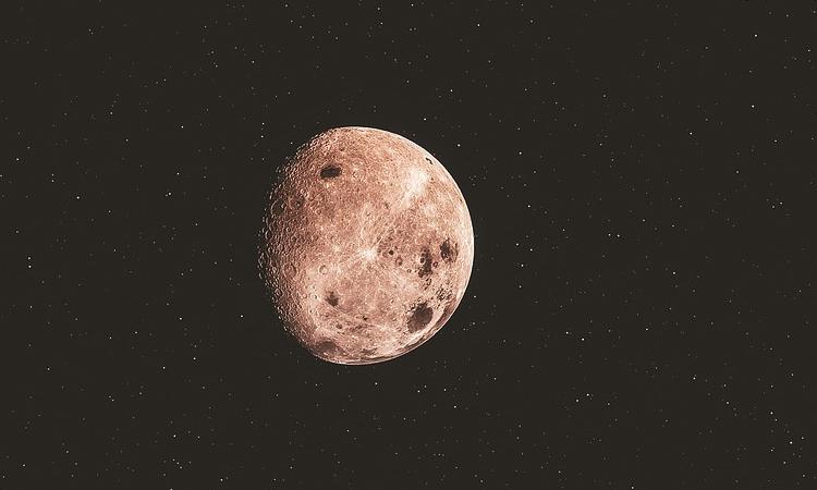 «Роскосмос» решил отправить животных на Луну
