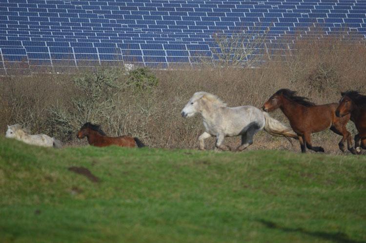 Цены на солнечные панели могут взлететь из-за взрыва на китайском заводе по выпуску сырья для фотоэлементов