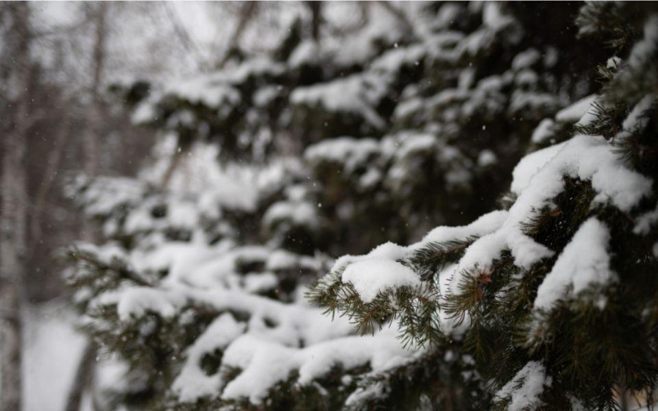 Зимняя погода с морозом до -17 градусов придет 13 марта в Алтайский край