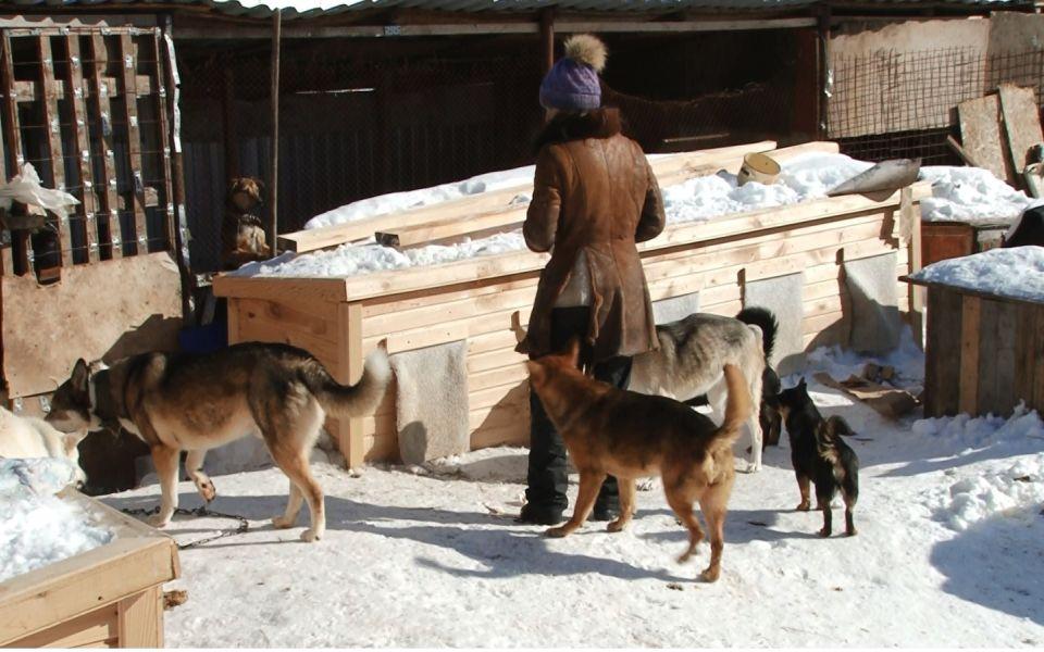 'Вонь и лай': жительница барнаульского посёлка держит 17 собак в частном доме