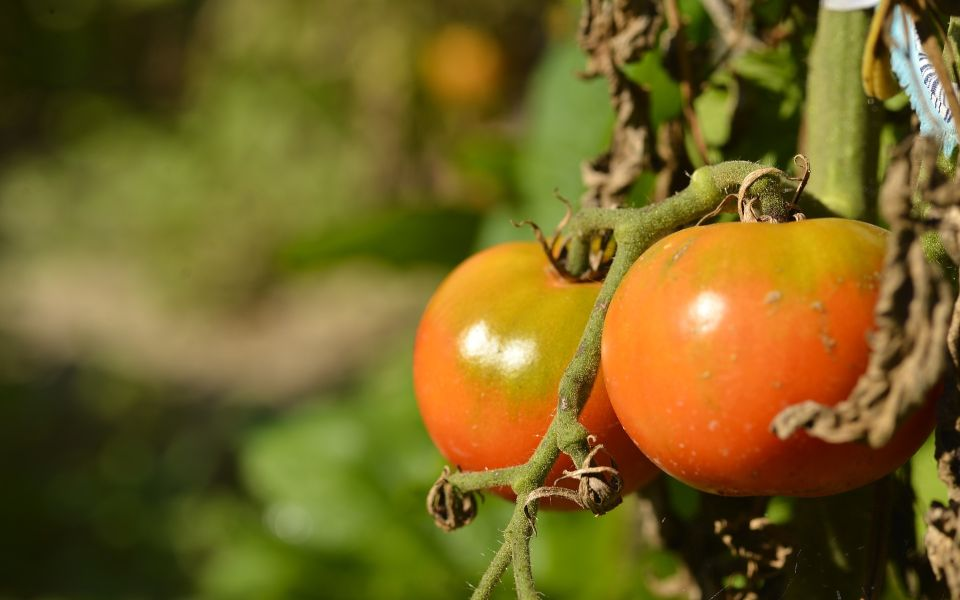 Шаман предсказала хороший урожай летом 2021 года