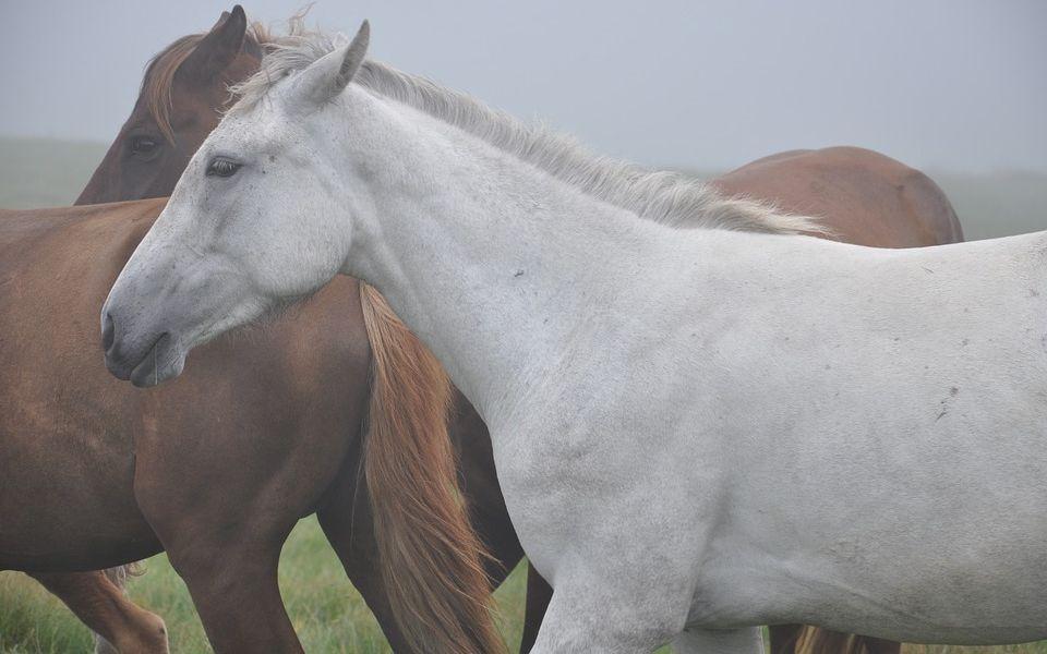 Начальника отделения полиции задержали за расстрел табуна лошадей на Алтае