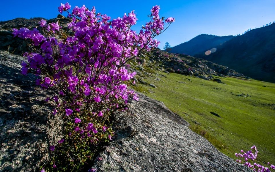 Гостям алтайского праздника 'Цветение маральника' обещают водное флайборд-шоу