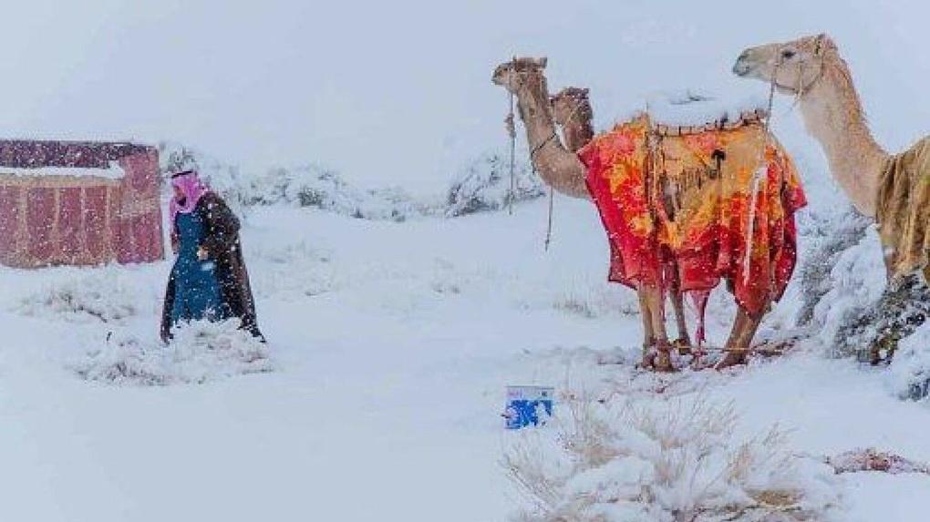 На Урале морозы, в пустыне идет снег, где обещанное глобальное потепление 5 наивных вопросов климатологу