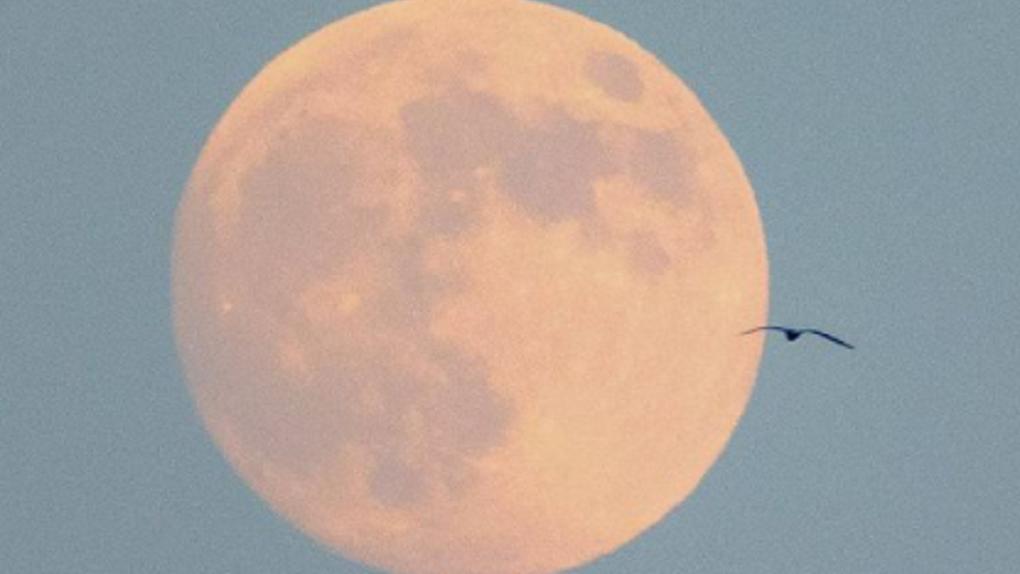 Ночью над Екатеринбургом взошла огромная Луна. Лучшие фото