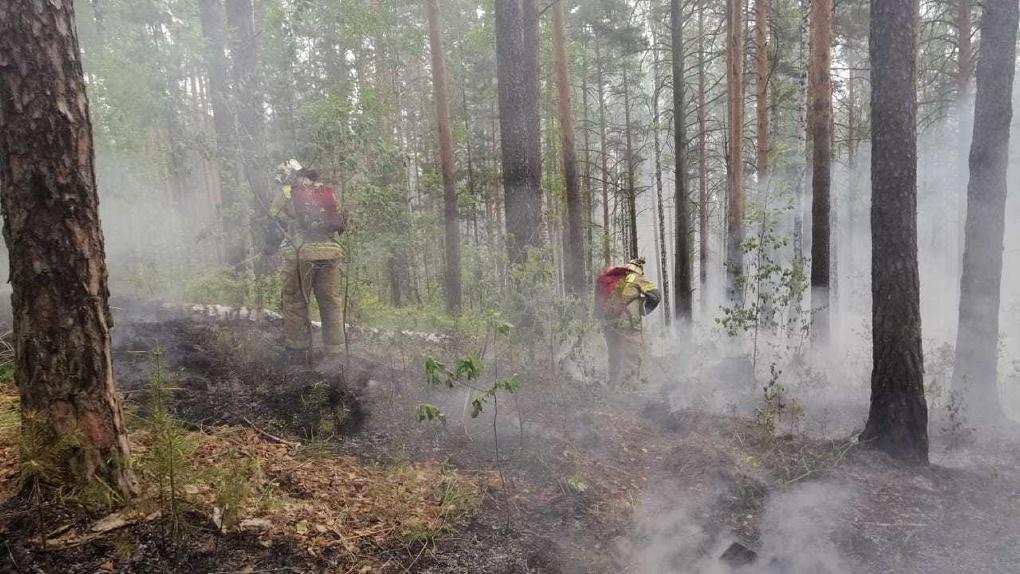 В Свердловской области запретят ходить в лес. Совсем
