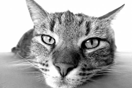 Байдены сообщили о решении завести кошку