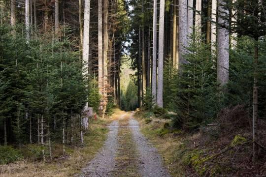Бывшего чиновника из Красноярского края подозревают в незаконной вырубке лесов