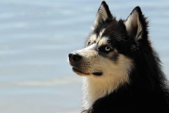 Депутаты Башкирии готовят законопроект об обязательной регистрации домашних животных