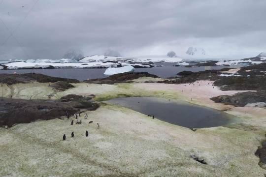 Рядом с украинской станцией в Антарктиде зацвёл снег