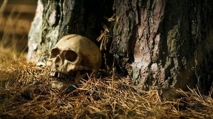Только кости и штаны: человеческий скелет обнаружили в лесу под Петербургом