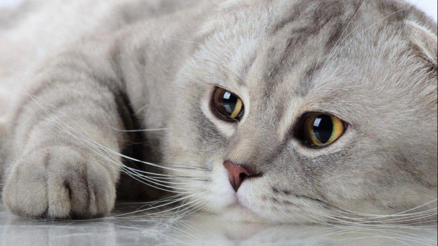 «Делать мир белее и пушистее» — в Петербурге выбирают лучших котов