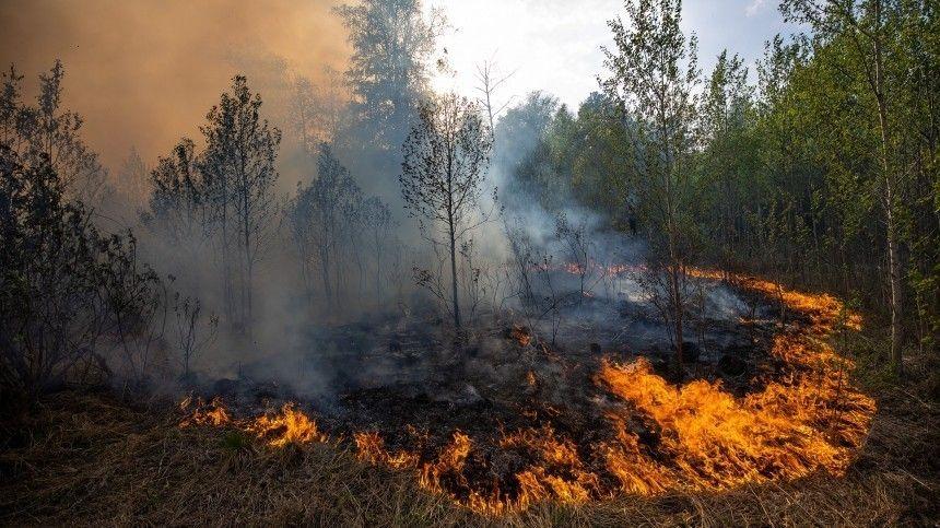 «Чуть не сдохли!» — пожарные в Тюмени чудом спаслись от огненной стены в реке
