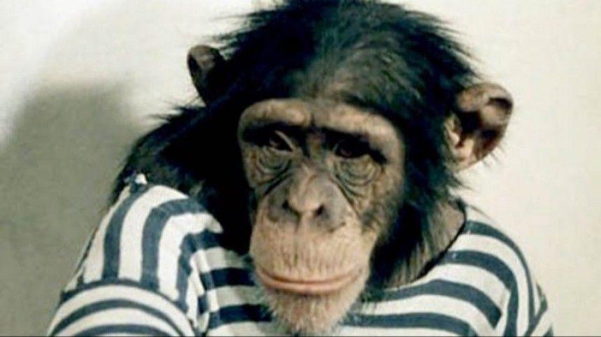Тест: Угадайте фильм с животным по одному кадру