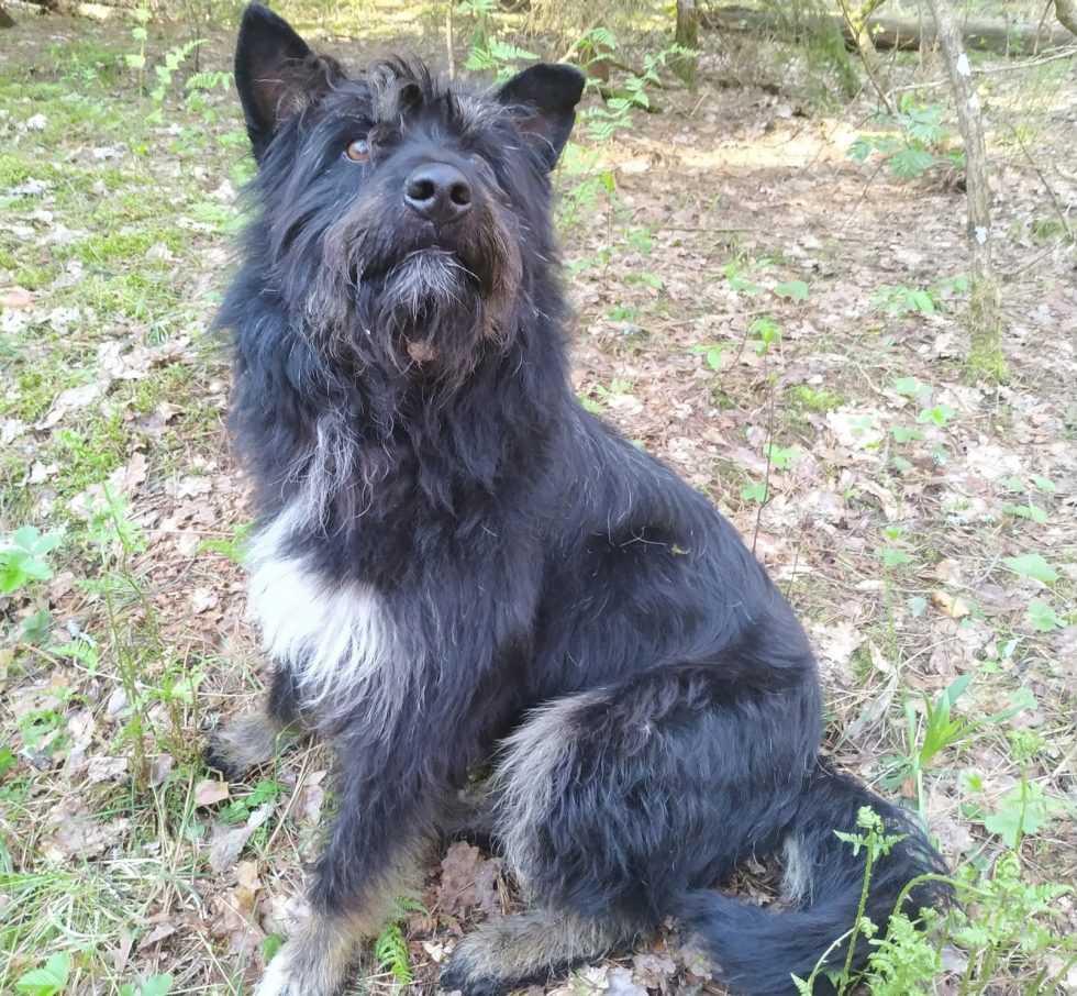 В брянском лесу девушке помогла пережить холодную ночь собака Тюбик