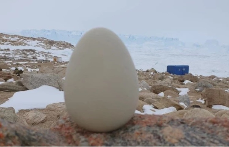 МТС начала продавать портативный датчик мониторинга микроклимата в форме яйца