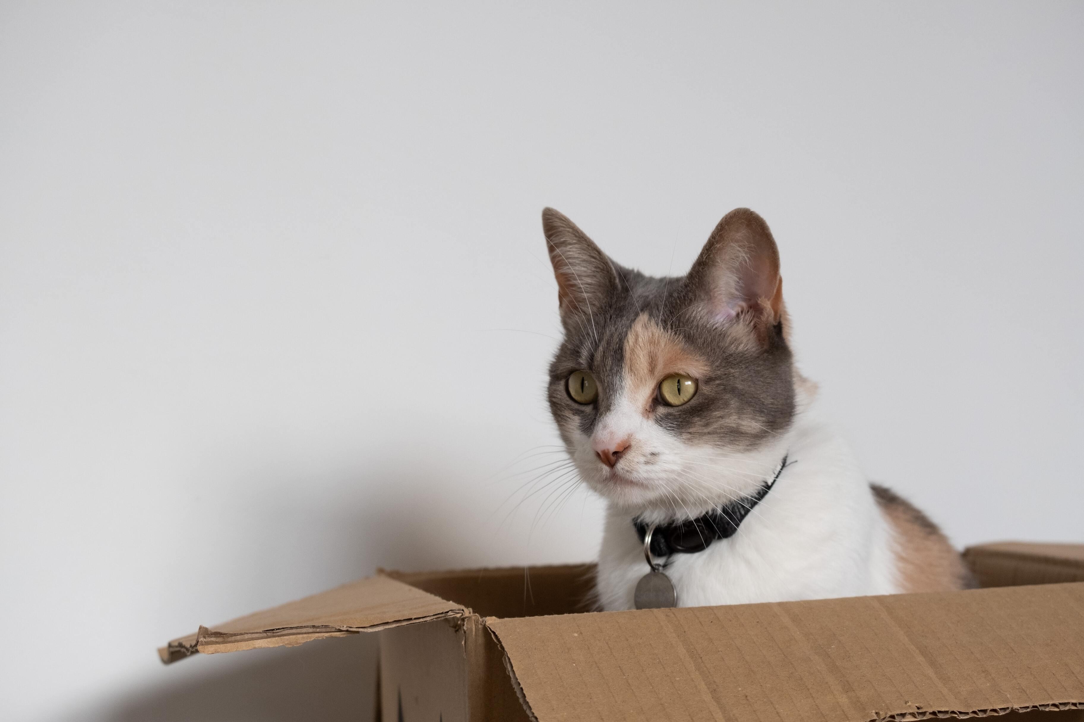 «Кошачьи» кубиты помогли сделать квантовый компьютер устойчивее к ошибкам