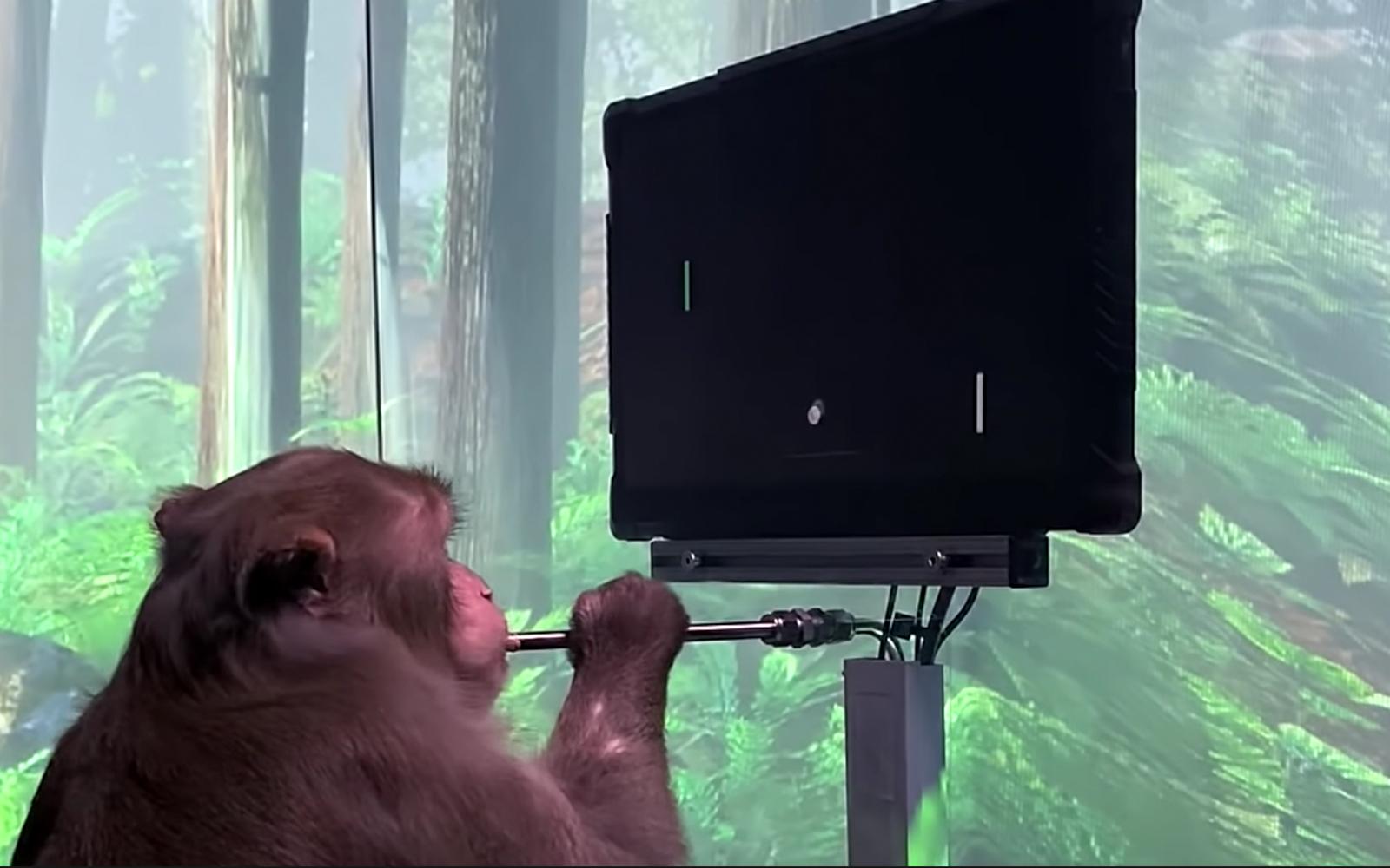 Мужчина с мозговым имплантатом бросил вызов чипированной обезьяне Илона Маска