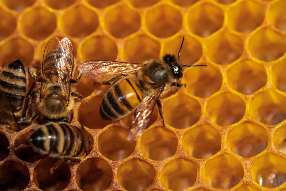 Пчёлы научились открывать пластиковые бутылки без посторонней помощи