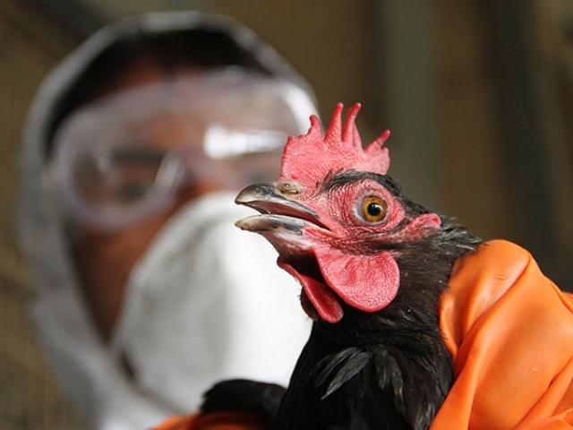 В Китае произошёл первый в истории случай заражения человека птичьим гриппом H10N3