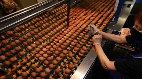 Бройлерам подбирают яйца // «Сибагро» может расширить птицеводческий дивизион