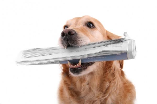 Госдума приняла закон о бесплатном газопроводе до границ участка