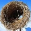 В Омской области птицам делают искусственные гнезда