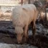 В омских Нефтяниках заблудился белый пони