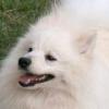 Мошенница, продавшая омичке несуществующую собаку, избежала тюрьмы