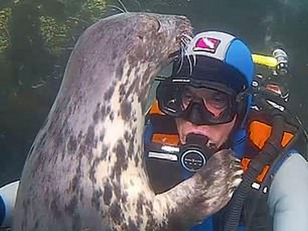Знакомство аквалангиста с тюленем набирает просмотры в YouTube