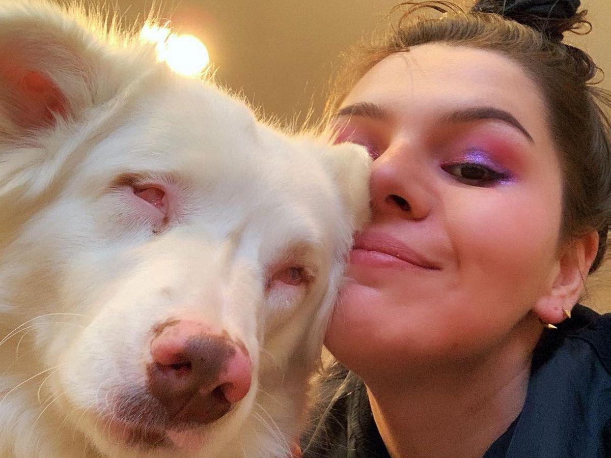 Видео встречи глухой и слепой собаки с хозяином после долгой разлуки растрогало Сеть